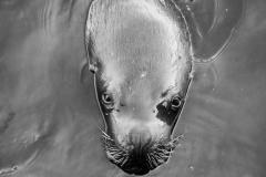 Wild Life Seal. PHOTO: ISA / Jimenez