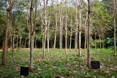 Dongshan Trees. PHOTO: ISA / Tim Hain